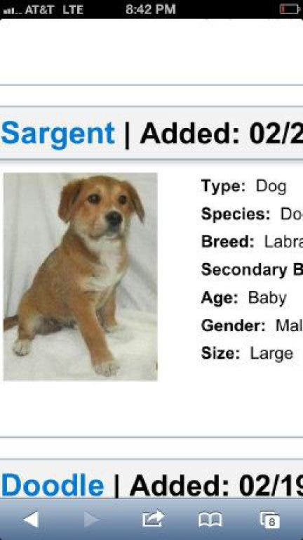Puppy Adoption Event This Saturday March 9 2013 At Petsmart Caldwells Nj Patch
