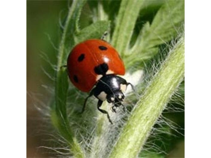 Bugs: Good and Bad in the Garden | Johnston, RI Patch