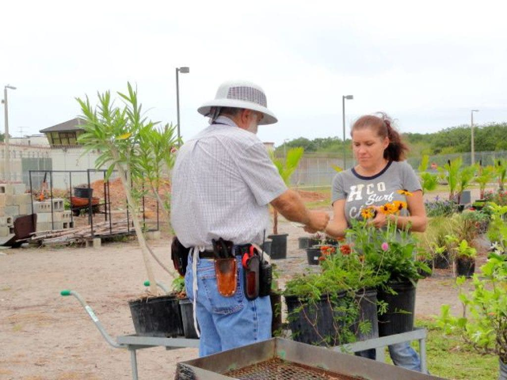 Plants for Sale at the Pinellas County Jail | St  Pete, FL Patch