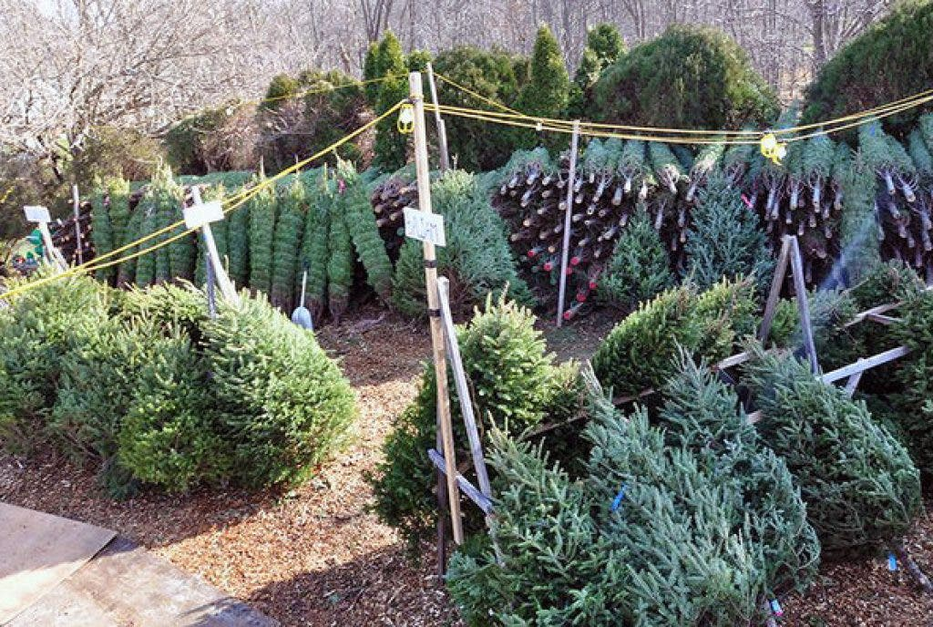 Where To Get A Christmas Tree In Ames Ames Ia Patch