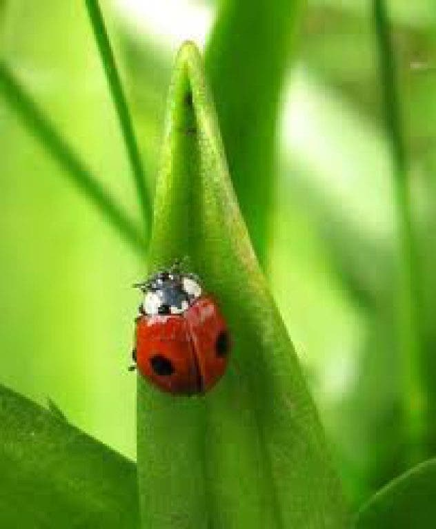 Good Bug, Bad Bug: Attract the right ones for your garden