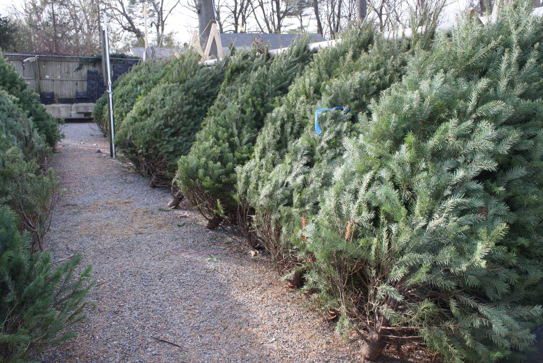 Christmas Tree Pick Up.Christmas Tree Pick Up Dates In Ellisville Ballwin Mo Patch