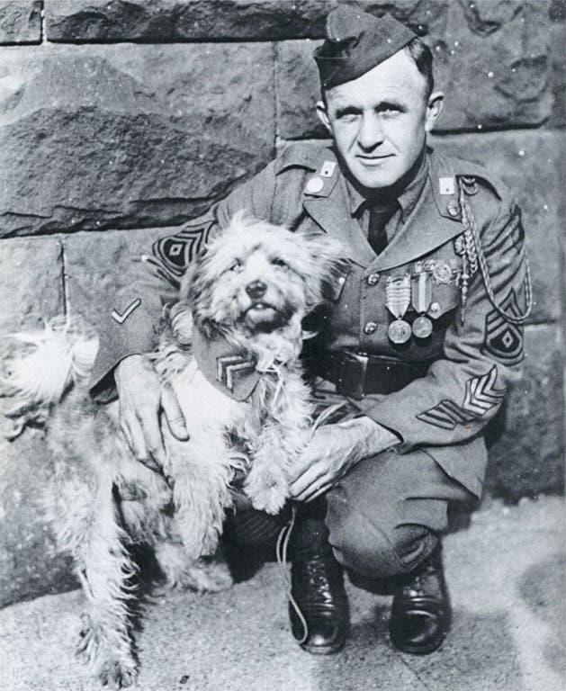 Seven Famous Dogs Of War | Los Gatos, CA Patch
