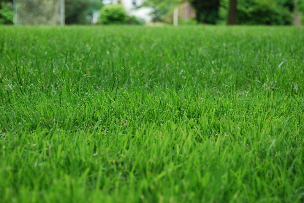What S The Going Rate For A Lawn Service In West Chester West
