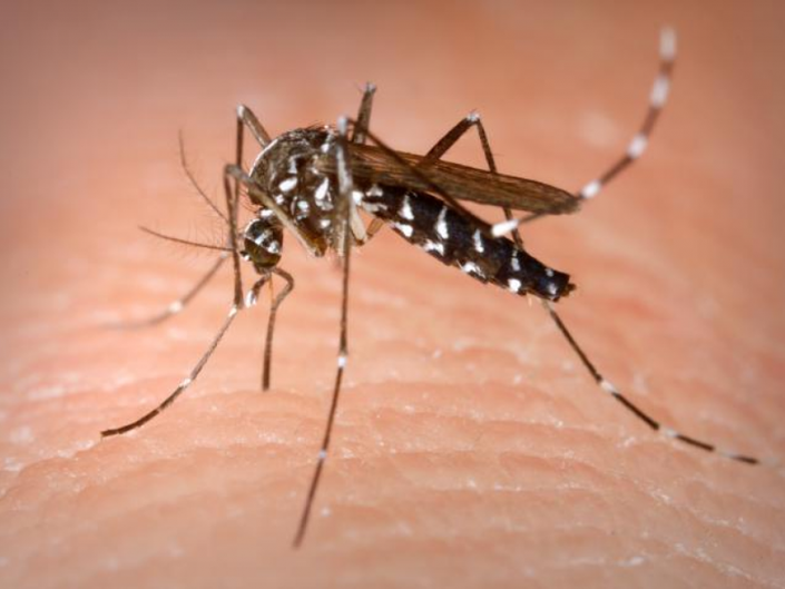 Mosquito Extermination Wednesday in Parsippany | Parsippany, NJ Patch