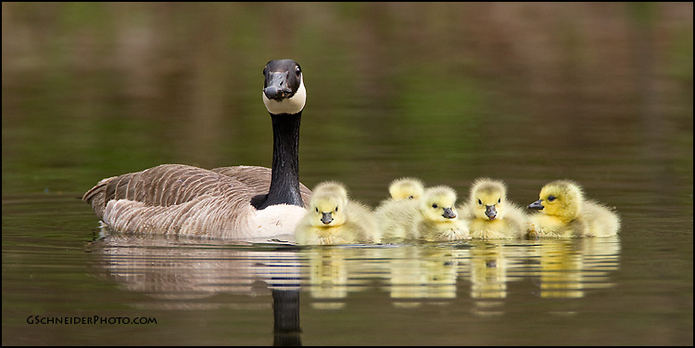 Hundreds of Canada Geese Slaughtered in Jamaica Bay Wildlife Refuge