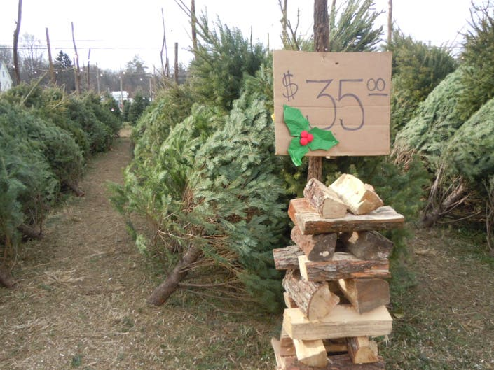 Where to Buy Christmas Trees In Marple Newtown | Marple ...