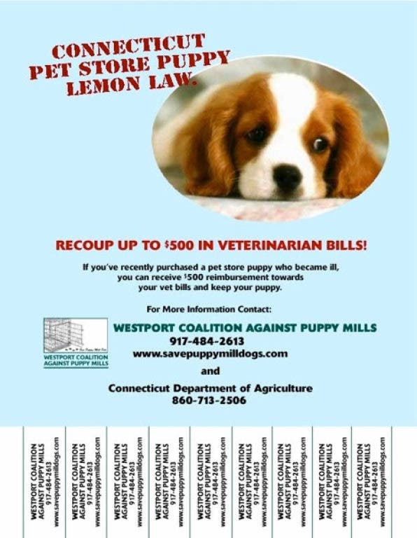 How to Stop Puppy Mill Cruelty (Follow-Up to
