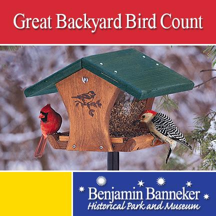 Great Backyard Bird Count   Laurel, MD Patch