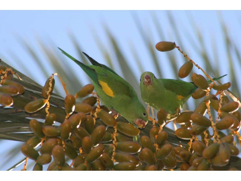 Squawk! Parrots are here to stay | Santa Monica, CA Patch
