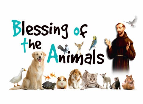 Image result for Blessing of animals st francis