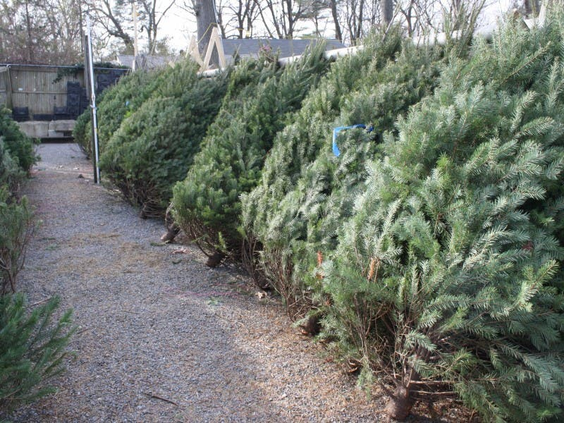 national christmas tree association is in chesterfields backyard