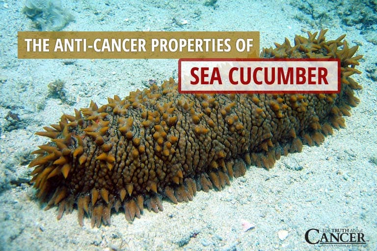 Is the Sea Cucumber the Next Miracle Cure for Cancer