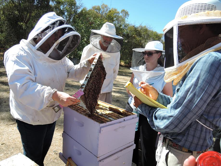 Interested In Becoming A Backyard Beekeeper? Cles Are ... on