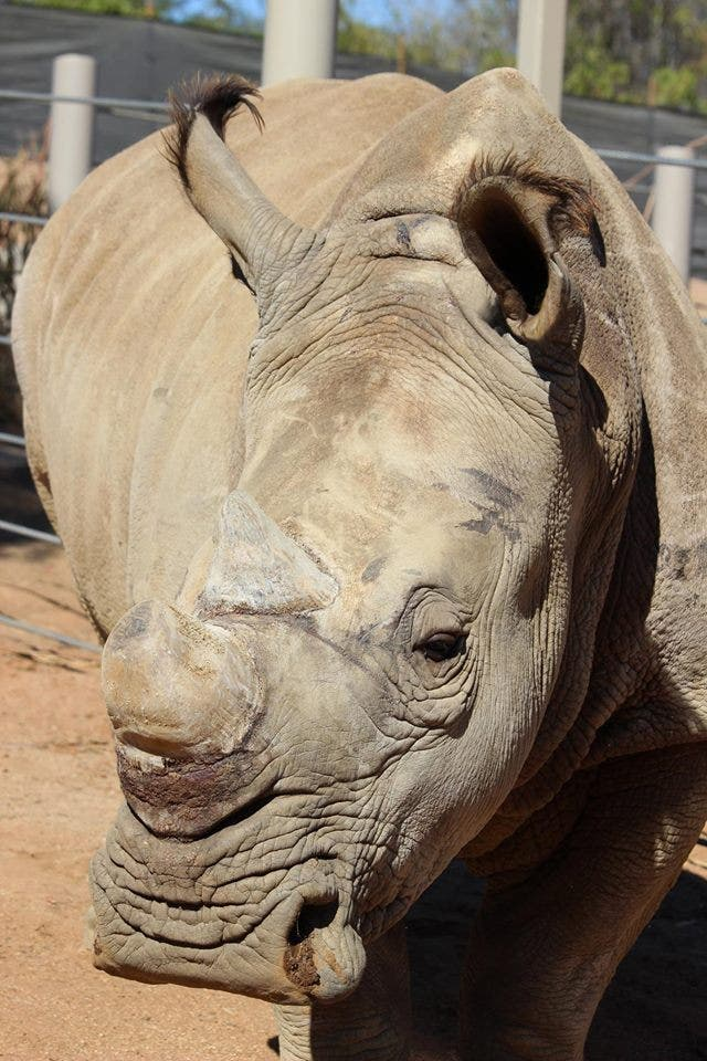 Names Selected For 6 Southern White Rhinos At SD Zoo Rhino