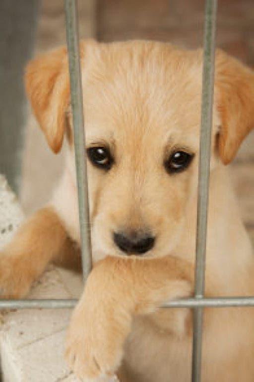 Over $14,000 Raised For West Orange Animal Welfare League By NJ Copy