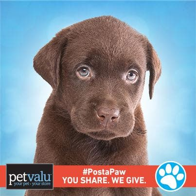 Pet Valu Paws Event Saturday And Sunday Pet Appreciation Week Cinnaminson Nj Patch