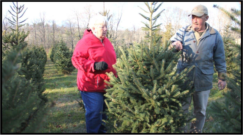 Stiles Christmas Tree Farm 2020 Historic 325 Year Old Southbury Farm to be Preserved | Southbury