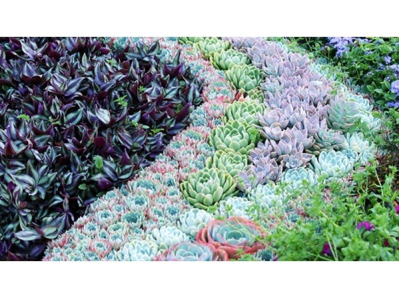 ... Drought Resistant Landscape Design To Mimic Your Indoor Succulent Terrarium-0 ...