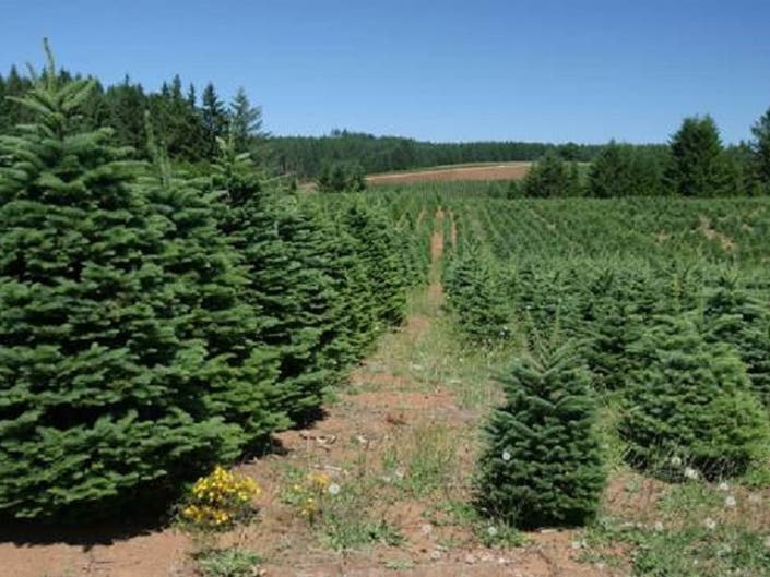 430e69f3068 Cut Your Own Christmas Tree This Year. Christmas tree farms are abundant in  New Jersey ...