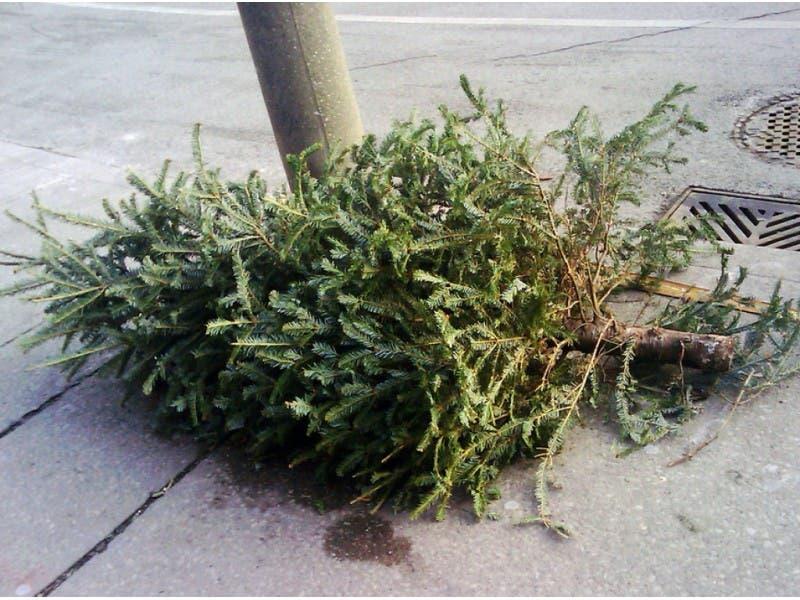 Christmas Trees Springfield Nj