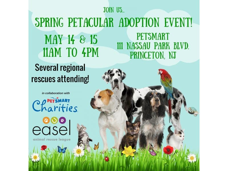 Spring Super Adoption Event Princeton Nj Patch