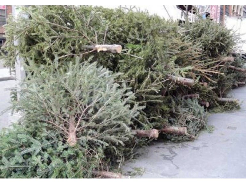 When is Curbside Christmas Tree Collection in Nashua? - When Is Curbside Christmas Tree Collection In Nashua? Nashua, NH Patch