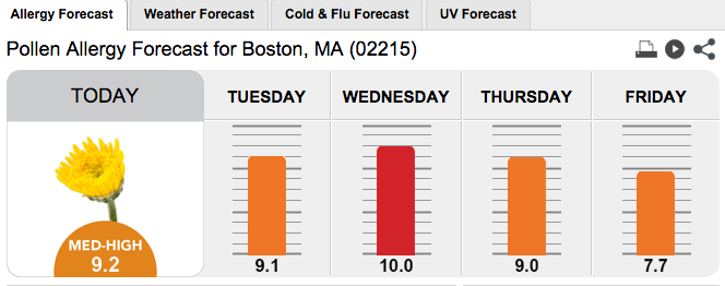 High Pollen Counts Expected in Fenway-Kenmore This Week
