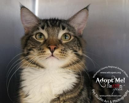 Adopt A Pet From The Williamson County Animal Shelter