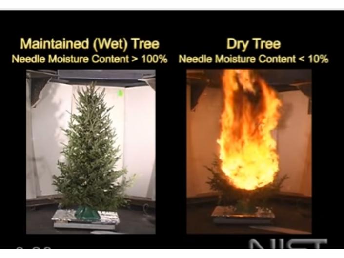 Burning Christmas Tree.Watch What Happens When A Christmas Tree Burns Woodbridge
