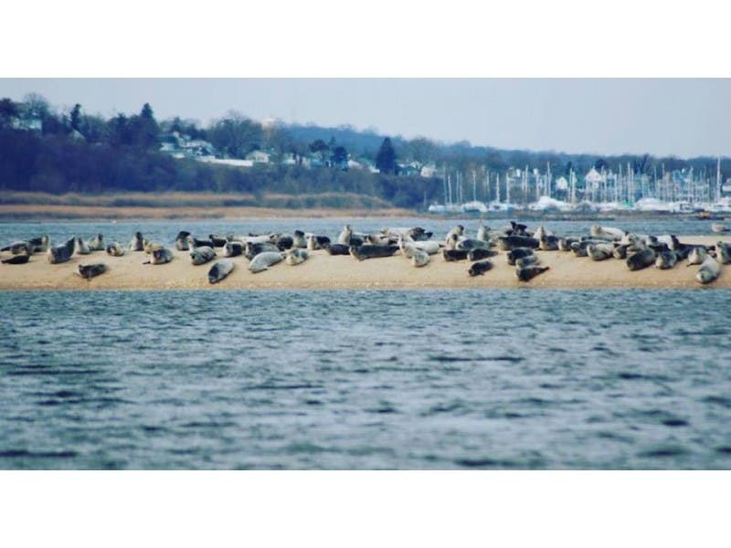 What is killing humpback whales? Another dead in NJ, but