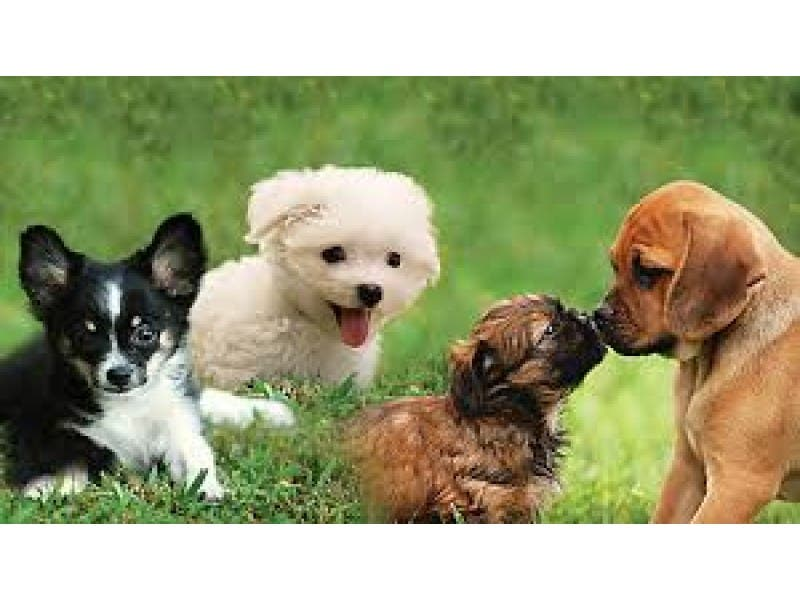 free social skills workshops for puppies and dogs bethesda md patch