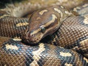 Real Live Snakes In Bernards Township Library Basking Ridge Nj Patch