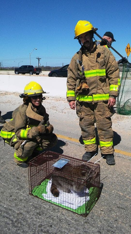 Rescue 911 Austin Firefighters Save Furry Fellow From