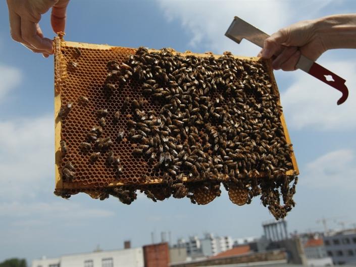 L.A. City Council Postpones Urban Beekeeping Vote Till February