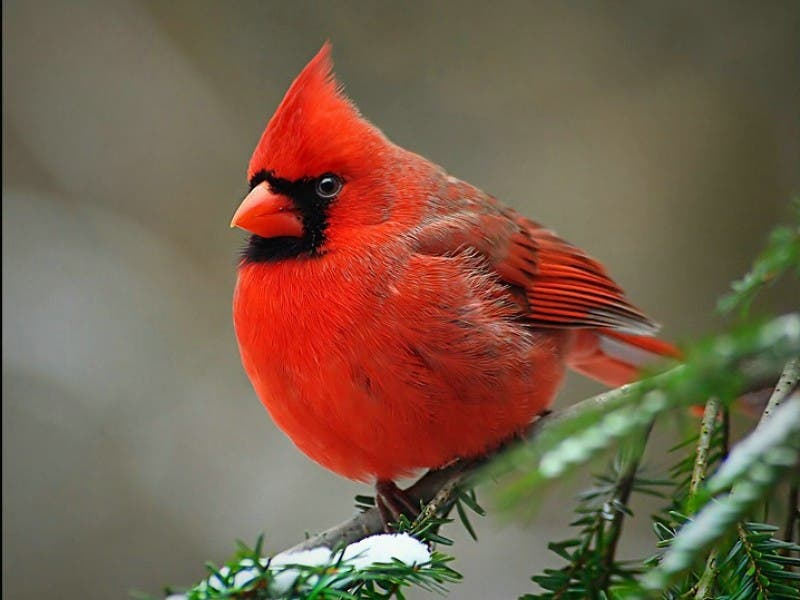 Birds In Your Backyard learn to identify your backyard birds | bernardsville, nj patch