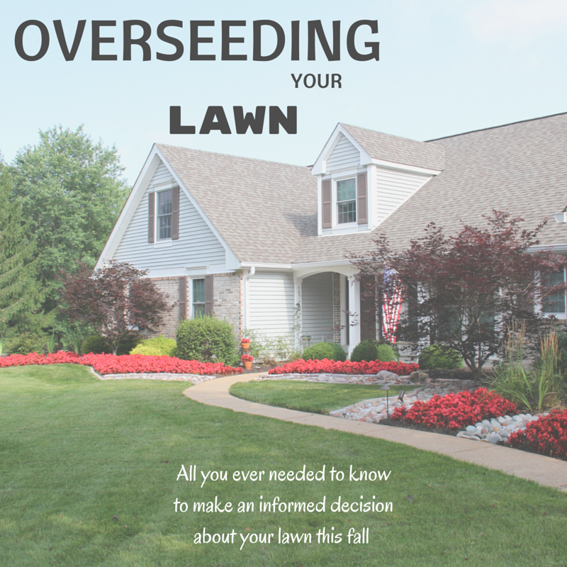 Lawn Overseeding Basics | Chesterfield, MO Patch