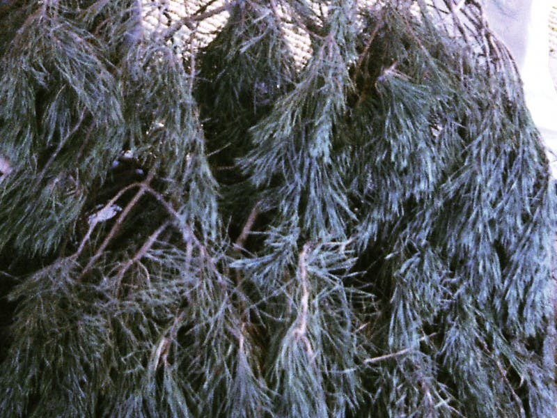 Where to Recycle Your Christmas Tree in San Diego County - Where To Recycle Your Christmas Tree In San Diego County Lemon