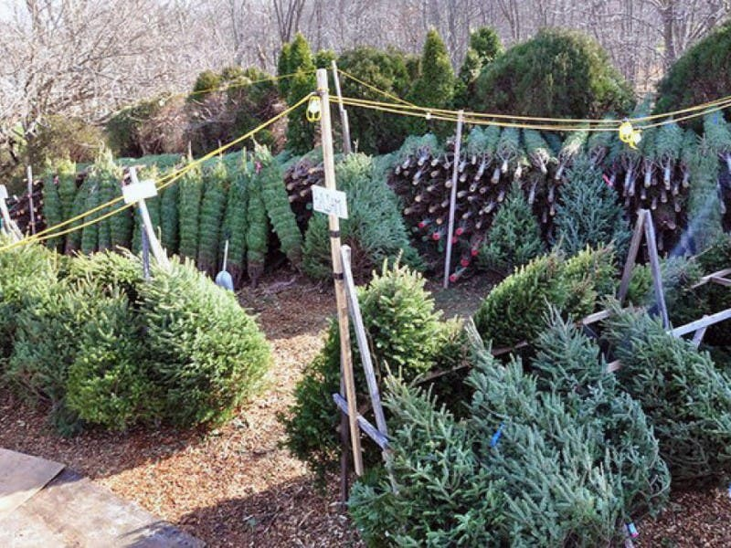 Where To Recycle Your Christmas Tree In Encinitas