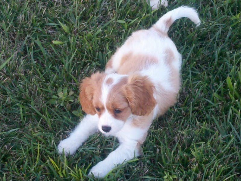 Puppy Breath And Potty Training Leesburg Va Patch