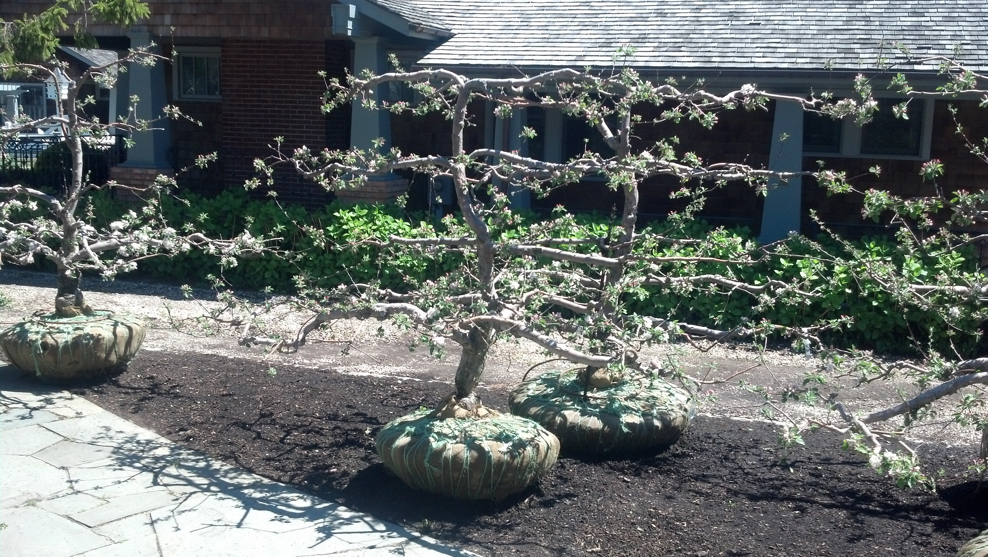 5 Life Lessons From 35 Year Old Hamptons Espalier Apple Trees