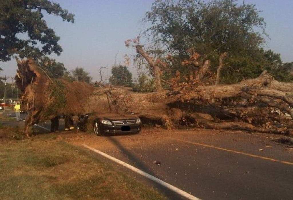 Driver Killed When Tree Falls On Moving Car Reston Va Patch