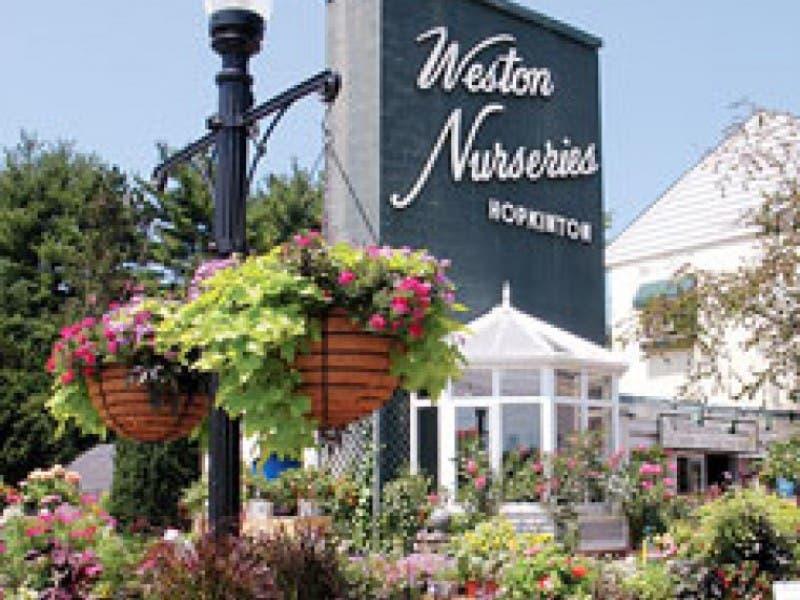 Farmers Market At Weston Nurseries Starts June 10 0
