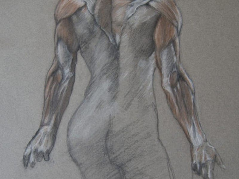 Dynamic Figure Drawing And Anatomy Workshop At Agnj Register Today