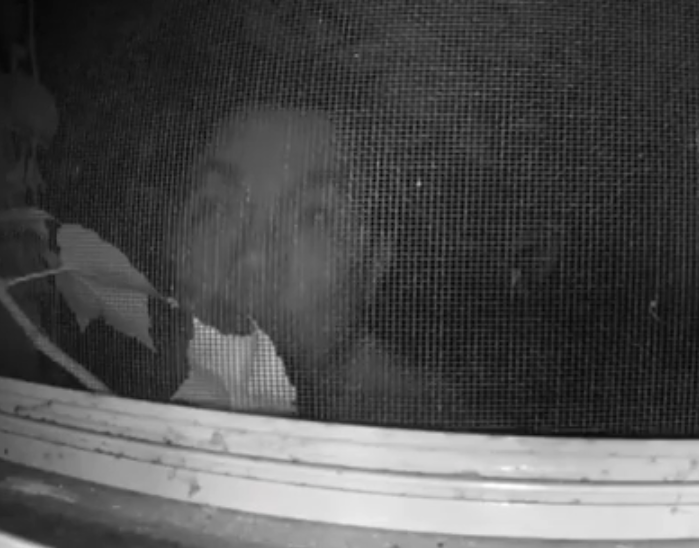 Boston Police Looking for Suspect Who Peeked Through