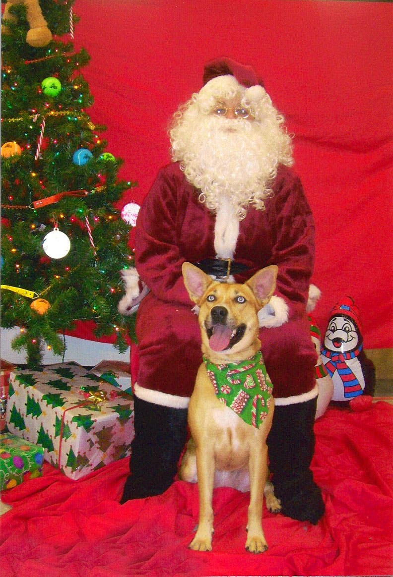 Petsmart Christmas Hours.Pet Photos With Santa At Petsmart Newtown Pa Patch