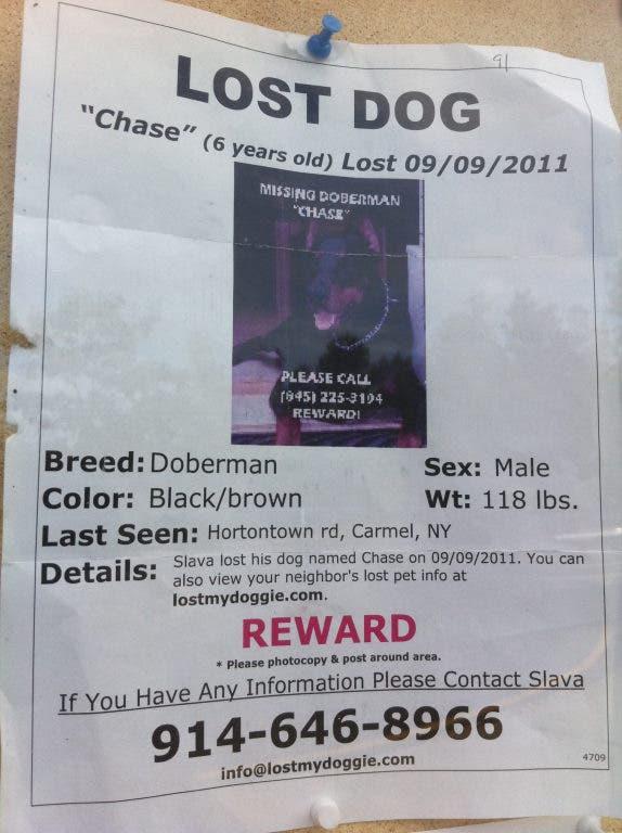 Post It: The Lost Pets Of Ridgefield | Ridgefield, CT Patch