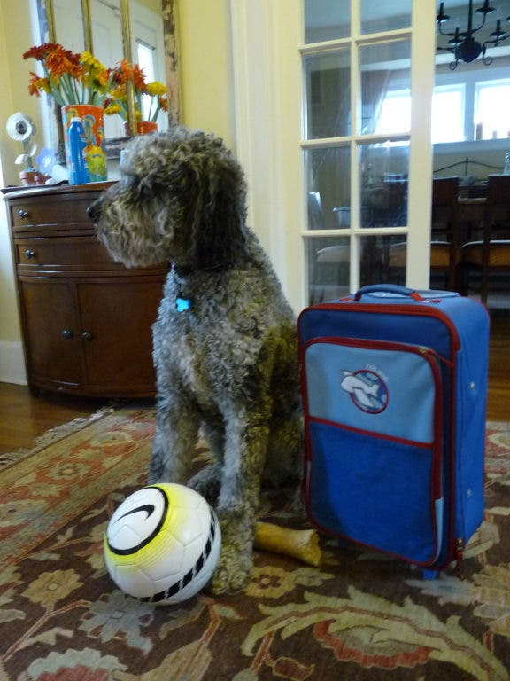 Where to Board Your Pet While You're Away   Montclair, NJ Patch
