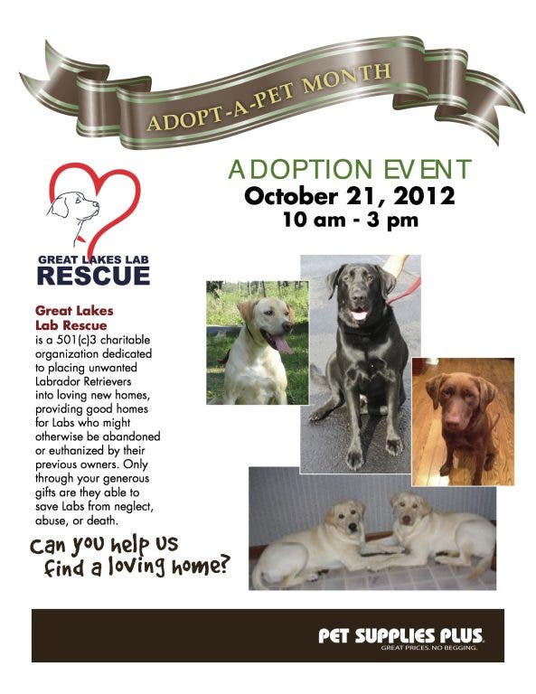 Great Lakes Lab Rescue Adoption Event | Elmhurst, IL Patch