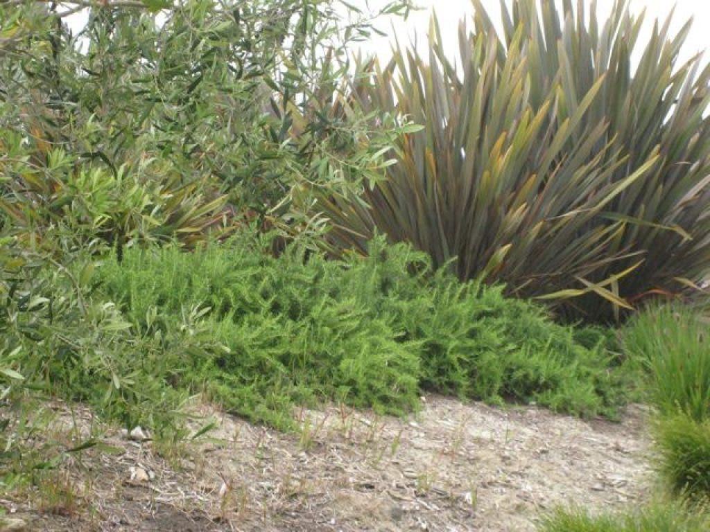 Sneak Peek At City Hall Landscape Plans Laguna Niguel Ca Patch